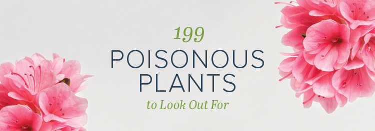 Poisonous Plants to Look Out For
