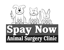 Spay Now
